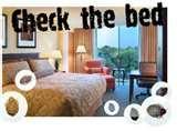 Bed Bugs Abc photos