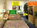 photos of Where Do Bed Bugs Hide During The Day