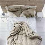 images of Bed Bugs Llp