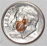 photos of Bed Bugs Waste
