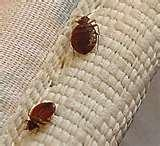 Bed Bugs At Movie Theater images