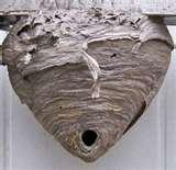 Bed Bugs Rhode Island images