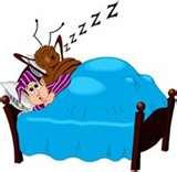 photos of Bed Bugs Current News