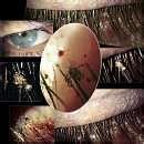 Bed Bugs Eyelashes images