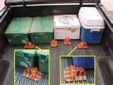 Bed Bugs Plastic images