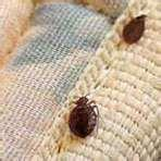 How To Treat Bed Bugs Effectively photos