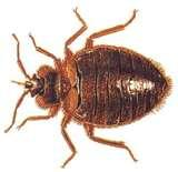pictures of Bed Bugs Guarantee