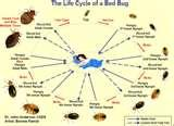Bed Bugs Move Fast photos