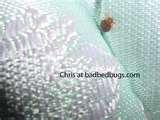pictures of Bed Bugs Bomb