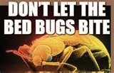 photos of Bed Bugs Louisiana