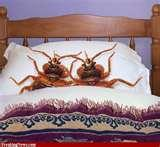 pictures of Bed Bugs Funny