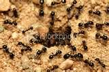 Bed Bugs Termination images