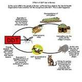 Bed Bugs Ddt Article photos