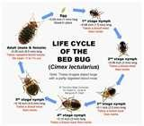 Bed Bugs Registry For New York Hotels images