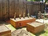 Bed Bugs Oak Park images