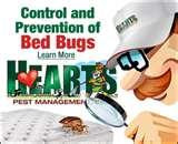 images of Bed Bugs Typhus