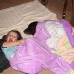 Bed Bugs Eradication Methods photos