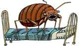 pictures of Bed Bugs Eradication Methods