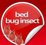 photos of Bed Bugs Away