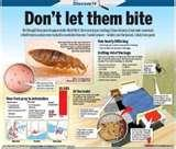 Bed Bugs Singapore images