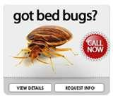 Bed Bugs Arizona pictures