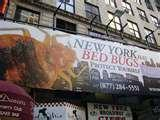 New York City Bed Bugs photos