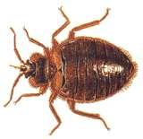 Get Rid Of Bed Bug photos