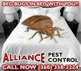 Exterminators Bed Bugs photos
