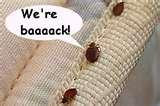 images of Can You See Bed Bugs