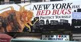 pictures of New York Bed Bugs