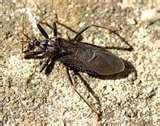Bed Bugs Photo photos