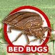 images of Bed Bug Exterminators