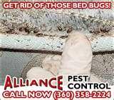Bed Bug Exterminators pictures
