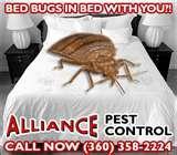 photos of Bed Bug Exterminators