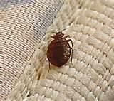 images of Bed Bug Remedies