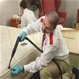 pictures of Bed Bugs Extermination