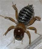 images of Eliminate Bed Bugs