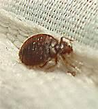 Photos of Bed Bug Cover