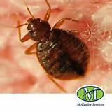 Images of How To Avoid Bed Bugs