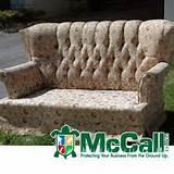 Bed Bugs Used Furniture Photos